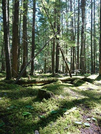 Lumby, Canadá: DSC_1247_large.jpg