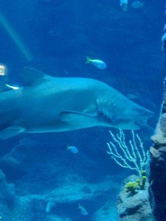 Aquarium Mare Nostrum: Centraal aquarium
