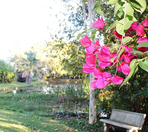 Idle & Wild: Bougainvillea near our small dam in the garden