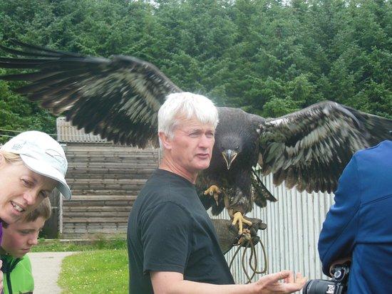 Huntly, UK: Baby bald eagle