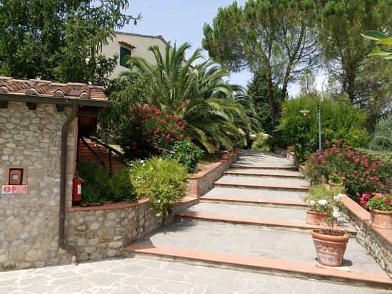 Montespertoli, Italia: Il vialetto che conduce al ristorante dalla piscina