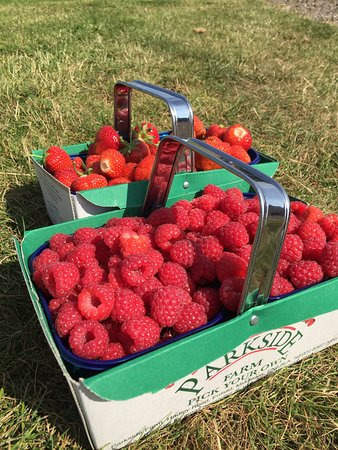 Enfield, UK: Our basket of berryliciousness! ;)