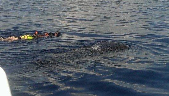 Pro Dive Mexico