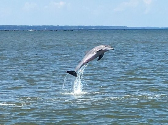 Captain Mike's Dolphin Tours: Fun and adventure watching Dolphins jump and swim and the beautiful sunsets
