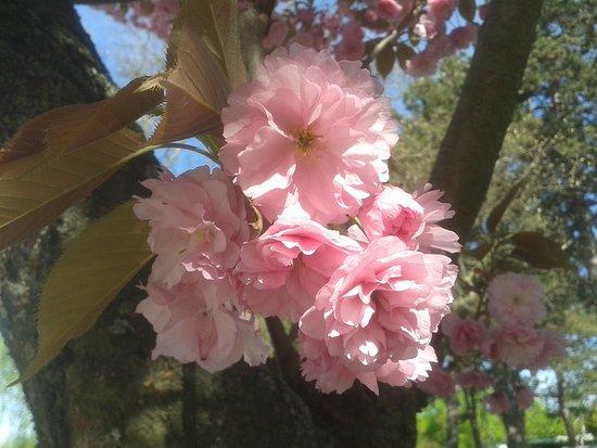 Szombathely, Hungría: Tavaszi virágözön