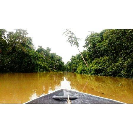 Sukau, Malásia: IMG_20160721_175608_large.jpg