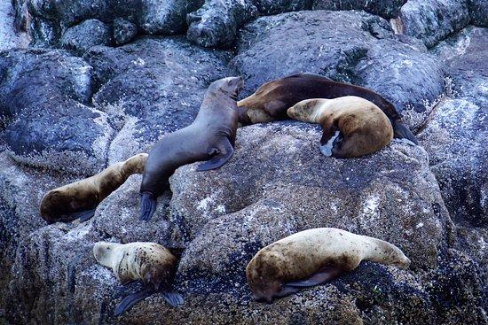 Seward, AK: Steller Sea Lions
