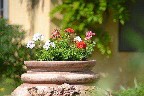 Montespertoli, Italy: Garden