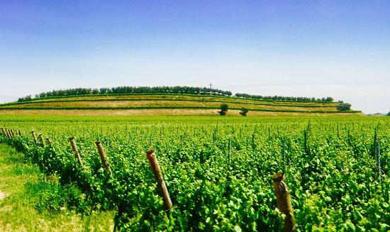 Caselle di Sommacampagna, Italia: Custoza vineyards