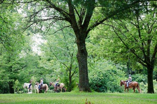 Ontario, WI : horse riding