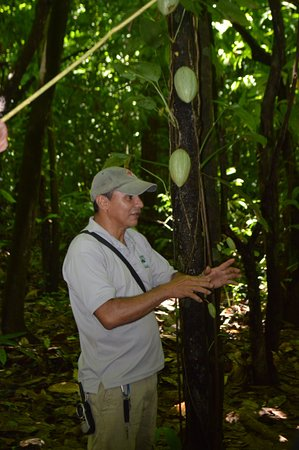 Dominical, Costa Rica: Our Guide David with a Cocoa tree