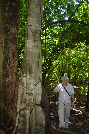 Dominical, Costa Rica: Termite mound with guide - I ate one and it tasted like wood