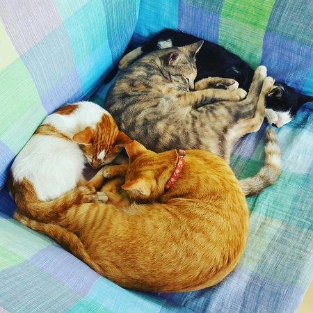 Cats At Portside Hotel Chiang Khong