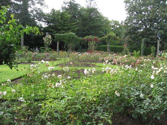 Dartford, UK: The Rose Garden in Central Park