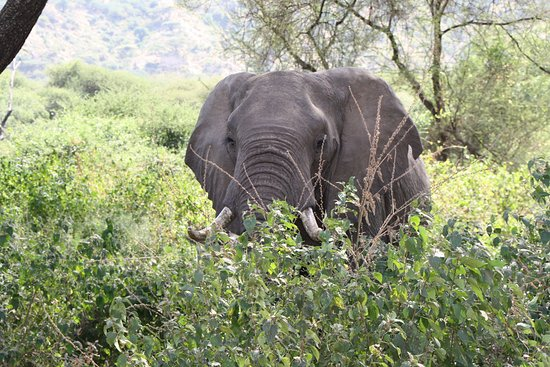 Arusha Region 사진
