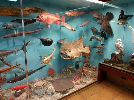 Vestmannaeyjar, ไอซ์แลนด์: Fish