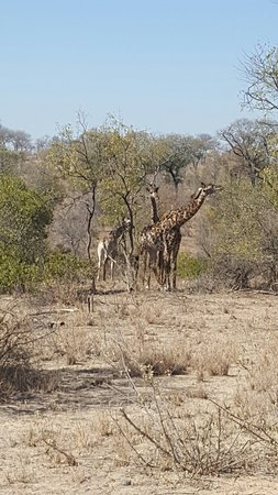 Nelspruit, Sudáfrica: Africa Spear Kruger Park Safaris - Day Tours