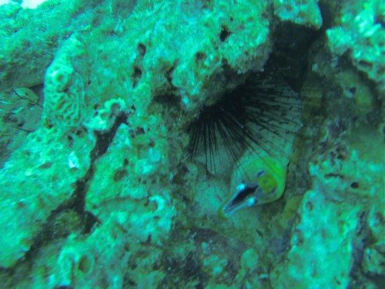 Merlin Divers - Kamala Diving Center: Fishies