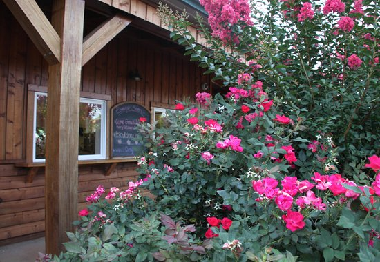 Crozet, VA: Beautiful Roses with Crepe Myrtle