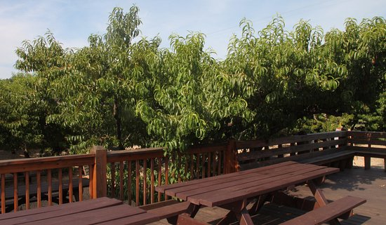 Crozet, VA: Deck Hedged By Peach Trees