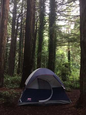 ‪‪Trinidad‬, كاليفورنيا: Tent camping among the redwoods‬