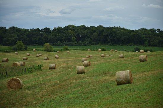 Lanesboro, MN: landscape