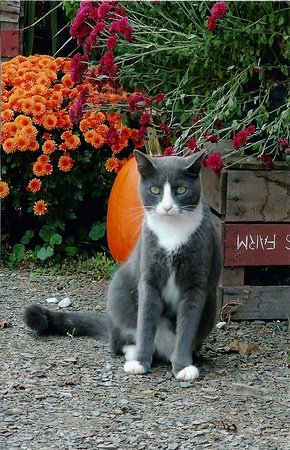 Orrtanna, PA: This photo was taken at the winery in 2008.