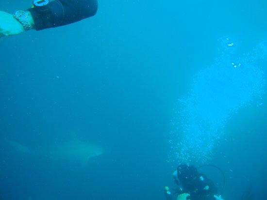 Puerto Baquerizo Moreno, Ekuador: Buceo con tiburón martillo
