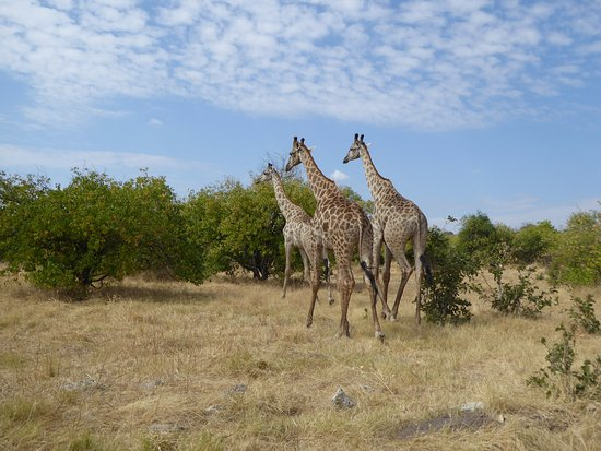 Bilde fra Chobe National Park