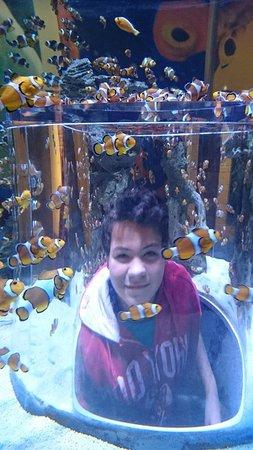 George, Zuid-Afrika: The Two Oceans Aquarium, Cape Town