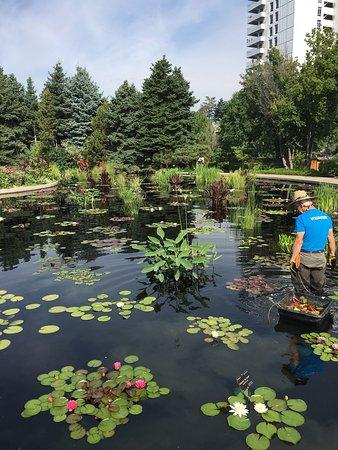 Denver Botanic Gardens: photo6.jpg