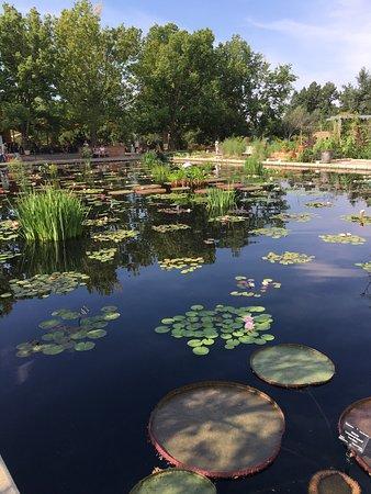 Denver Botanic Gardens: photo7.jpg