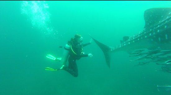 Vitória, Ilhas Seychelles: In love!! <3