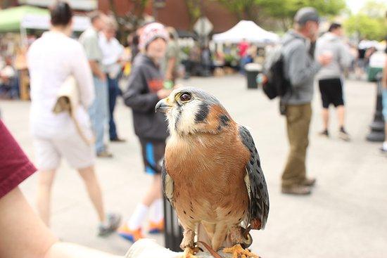 Moscow, ID: International Migratory Bird Day with the WSU Raptor Club
