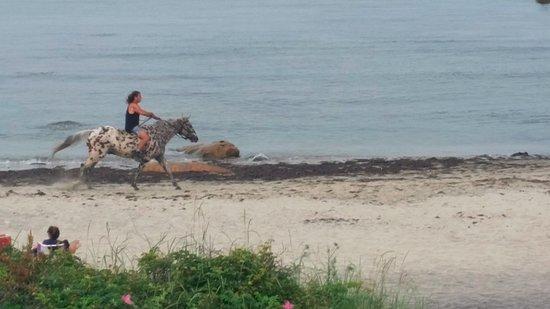 Avonlea, Jewel of the Sea: Balcony view of horses on the beach