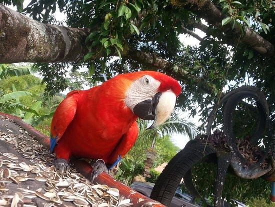 El Castillo, คอสตาริกา: Bannano getting his treats