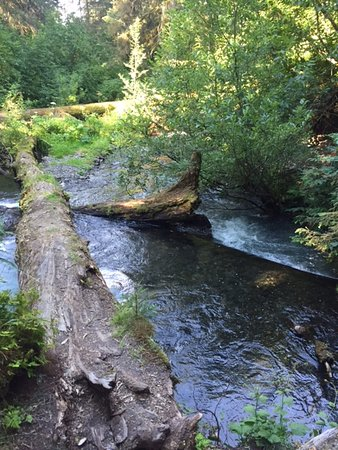 Bear Creek Cabins: A salmon filled creek right outside our door! Loved exploring on the gravel walking path!