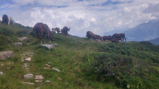 Alpes austríacos, Austria: Montafon