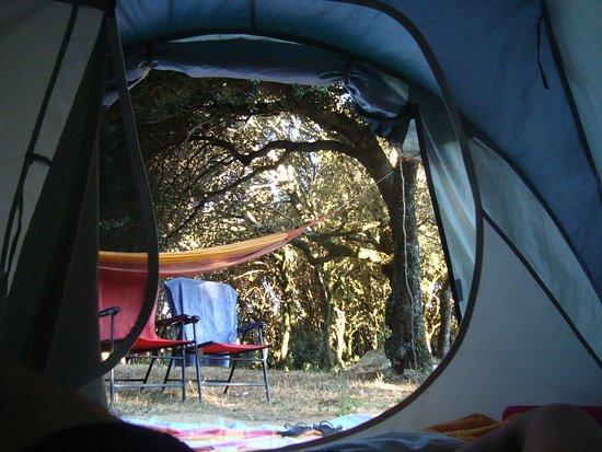 Santu Lussurgiu, Italia: réveil en forêt