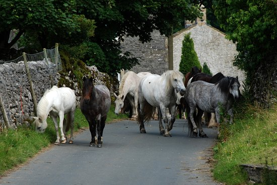 Kilnsey Trekking & Riding Centre