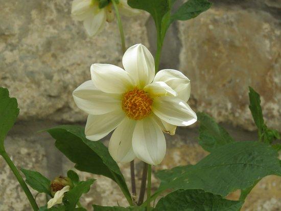 Groznjan, Chorwacja: Flores del patio.