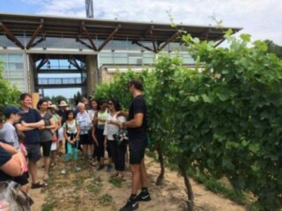 Grape Escape Wine Tours: IMG_1036_large.jpg