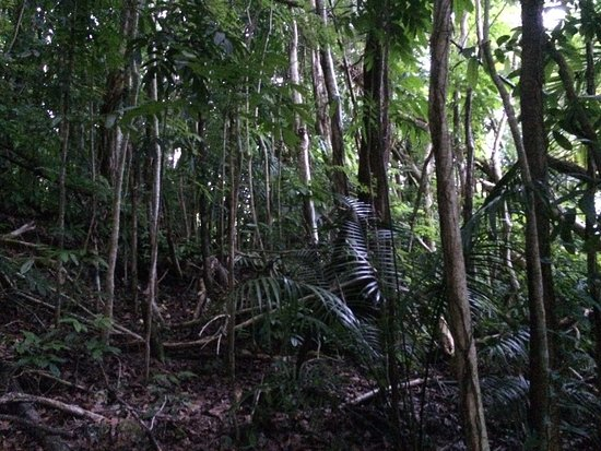 Piti, Mariana Islands: The Mahogany forest and what marines would have had to march through to get to this site