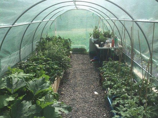 The Taynuilt hotel Kitchen garden