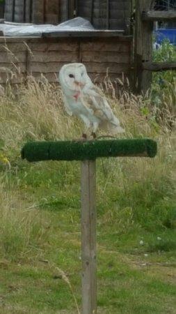 Paddock Wood, UK: 20160726_133748_large.jpg