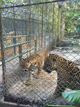Quistacocha Zoo: photo4.jpg