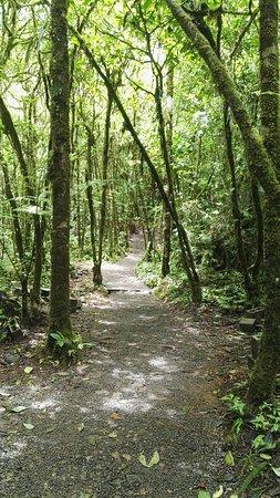 Национальный парк Вулкан Тенорио, Коста-Рика: IMG_20160724_114611_large.jpg