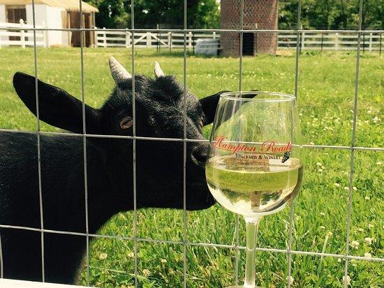 Surry, VA: Drunkin' Goat?
