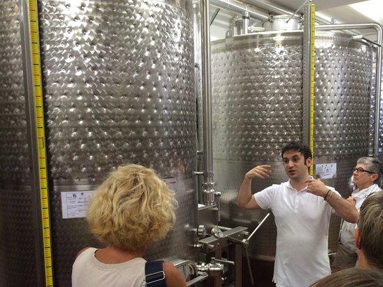 Torgiano, Italien: Und hier entsteht dieses gute Getränk