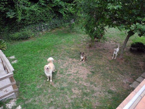 San Giovanni a Piro, Italia: Tre dei cani di casa.
